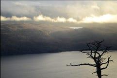 Ensamt vinterträd över Loch Ness Royaltyfri Fotografi