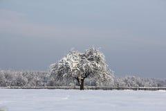 Ensamt vinterträd Royaltyfri Fotografi
