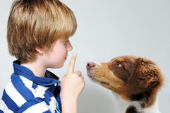 Enseñanza del perro Imagen de archivo