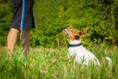 Enseñanza del perro y del dueño Imagen de archivo libre de regalías