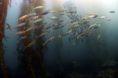 Enseñar pescados Imagen de archivo