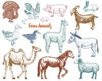 Ensemble animal mignon de ferme grand Illustration de vecteur Chameau, cheval, chèvre, porc, âne, moutons de montagne, lama ou al Image stock