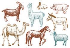 Ensemble animal mignon de ferme grand Illustration de vecteur Chameau, cheval, chèvre, porc, âne, moutons de montagne, lama ou al Photo libre de droits