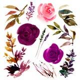 Ensemble botanique de roses d'isolement de Bourgogne d'aquarelle, bourgeons, feuilles illustration de vecteur