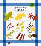 Ensemble coloré d'épices dans le style plat Ensemble de vecteur Image stock