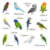 Ensemble coloré d'icônes de perroquet Image stock
