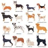 Ensemble coloré d'icône de chiens d'animal de race Photo libre de droits