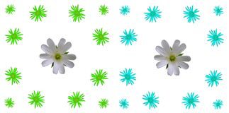 Ensemble coloré floral de fond de modèle Photographie stock