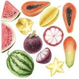 Ensemble color? d'aquarelle de brigt tir? par la main de fruits tropicaux d'isolement illustration libre de droits