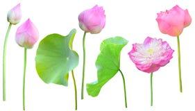 Ensemble décoratif de Lotus sur le fond blanc image libre de droits