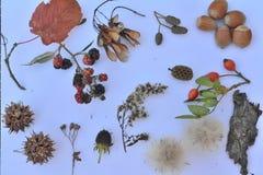 Ensemble d'éléments de nature d'automne Photos stock