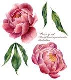 Ensemble d'éléments floral d'aquarelle Feuilles de vintage et fleurs de pivoine d'isolement sur le fond blanc Botanique tiré par  Image stock