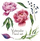 Ensemble d'éléments floral d'aquarelle Feuilles de vintage, eucalyptus Images stock