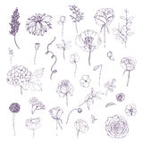 Ensemble d'éléments floral d'ensemble tiré par la main Collection avec les fleurs et la plante différentes Photo libre de droits
