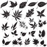 Ensemble d'éléments noirs de conception florale Photographie stock libre de droits