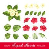 Ensemble d'éléments tropicaux de fleurs Image stock