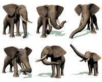 Ensemble d'éléphants illustration de vecteur