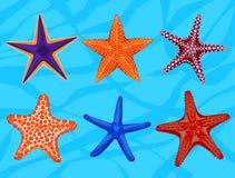 Ensemble d'étoiles de mer réalistes colorées, animal invertébré sous-marin Photographie stock libre de droits
