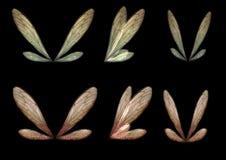 Ensemble d'ailes 2 de Faerie Image libre de droits
