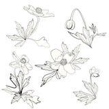 Ensemble d'anémones, de fleurs et de feuilles Image libre de droits
