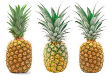 Ensemble d'ananas d'isolement sur le fond blanc Photo libre de droits