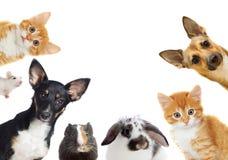 Ensemble d'animal familier Image libre de droits