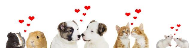 Ensemble d'animaux Photographie stock libre de droits