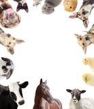 Ensemble d'animaux de ferme images libres de droits