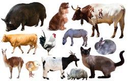 Ensemble d'animaux de ferme Image libre de droits
