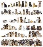 Ensemble d'animaux familiers Image libre de droits