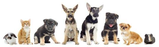 Ensemble d'animaux familiers Photos libres de droits
