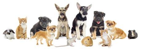 Ensemble d'animaux familiers Images stock