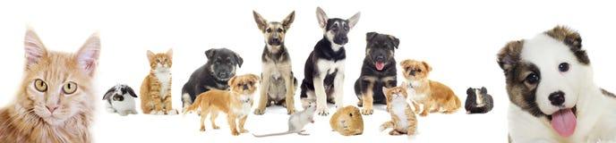 Ensemble d'animaux familiers Photo stock