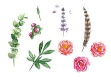 Ensemble d'aquarelle avec des feuilles, des pivoines, la plume et la lavande Images stock