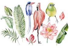 Ensemble d'aquarelle avec les feuilles, les fleurs et les oiseaux tropicaux Illustra Photo stock
