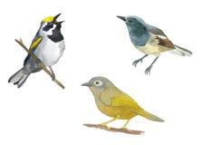 Ensemble d'aquarelle d'oiseau Photographie stock libre de droits