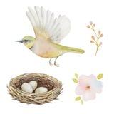 Ensemble d'aquarelle d'oiseau et de nid avec des oeufs illustration de vecteur