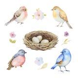 Ensemble d'aquarelle d'oiseaux, de fleurs et de prise avec des oeufs Photos stock