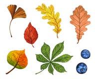 Ensemble d'aquarelle de belles feuilles d'automne colorées d'isolement sur le fond blanc illustration stock