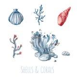 Ensemble d'aquarelle de coquilles et de coraux Images stock