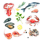 Ensemble d'aquarelle de fruits de mer Images stock