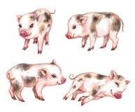 Ensemble d'aquarelle de porcs micro illustration de vecteur