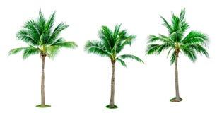 Ensemble d'arbre de noix de coco d'isolement sur le fond blanc utilisé pour faire de la publicité l'architecture décorative photo stock