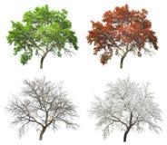 Ensemble d'arbre saisonnier en automne et hiver d'été Images libres de droits