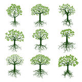 Ensemble d'arbres et de racines verts Illustration de vecteur Photo libre de droits
