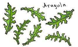 Ensemble d'Arugula Rucola, Rocket Salad Fresh Green Leaves Herbe aromatique Ingrédient à cuire frais de salade Illustration tirée Photos stock