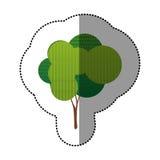 ensemble d'autocollant de couleur d'icône abstraite d'arbre Photographie stock