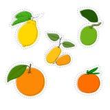Ensemble d'autocollant de couleur de vecteur d'agrumes Citron, orange, mandarine, chaux, kumquat illustration de vecteur
