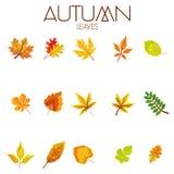Ensemble d'Autumn Leaves abstrait différent Photo stock