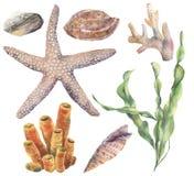 Ensemble d'eau du fond d'aquarelle Laminaria, coraux, étoiles de mer, caillou peint à la main de mer et coquillages d'isolement s illustration libre de droits